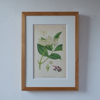 <img class='new_mark_img1' src='https://img.shop-pro.jp/img/new/icons14.gif' style='border:none;display:inline;margin:0px;padding:0px;width:auto;' />BOTANICAL ART