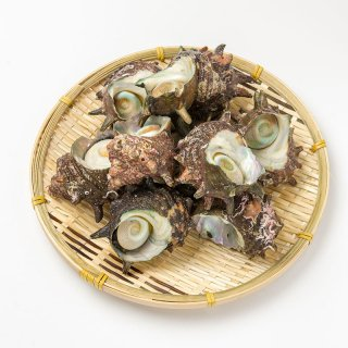 若狭湾産 天然サザエ 1kg 8-15個入り(不揃い) | 活サザエ
