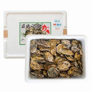 若狭湾 牡蠣殻付き 若狭/仏谷 約5kg前後 加熱用