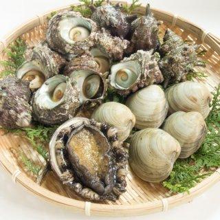 貝3種セット(サザエ・黒アワビ・ホンビノス貝)
