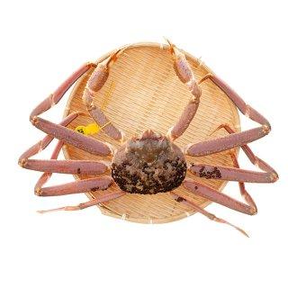 (生)活 越前かに  600gサイズ (かに鍋・焼き蟹・お刺身に最適です)