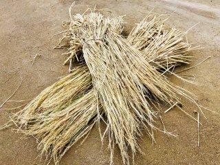 【 最高の稲わら】 自然栽培の稲わら