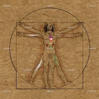 人体の調和と内部(アンティーク調)(Sサイズ)