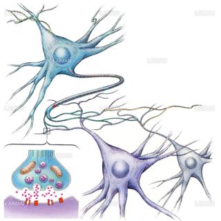 神経細胞とシナプス(Sサイズ)