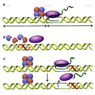 三重鎖形成の作用物質(Sサイズ)