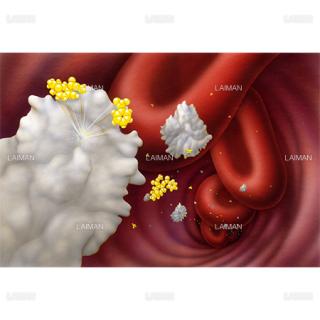 血中でコカインを分解する抗体(コカイン中毒の免疫療法)(Sサイズ)