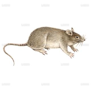 マウス(Sサイズ)