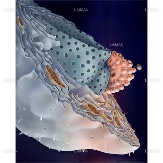 細胞の構造(Sサイズ)