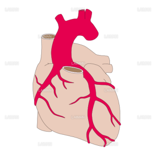 冠状動脈 (Sサイズ)