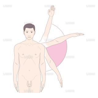 肩関節の徒手検査法 (Sサイズ)