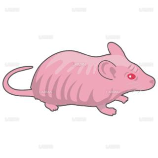 マウス(ヌードマウス)(Sサイズ)