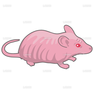 マウス(ヌードマウス)(Mサイズ)