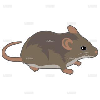 マウス(茶系)(Mサイズ)