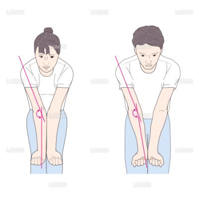 肘関節の男女の違い (Mサイズ) - LAIMAN Stockweb | メディカル ...