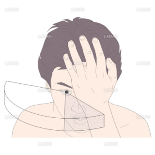 正常眼で見える範囲 (Mサイズ)