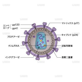 HIVウィルス(構造・文字あり)(Sサイズ)
