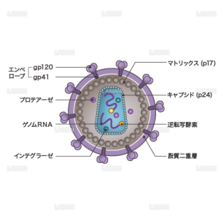 HIVウィルス(構造・文字あり)(Mサイズ)