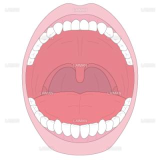 口腔の構造(Sサイズ)