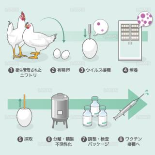 ワクチンの製造(ふ化鶏卵培養法) (Mサイズ)