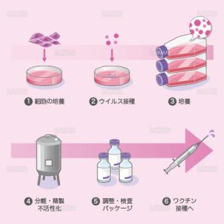 ワクチンの製造(細胞培養法) (Mサイズ)