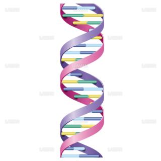 DNAの構造 (Sサイズ)