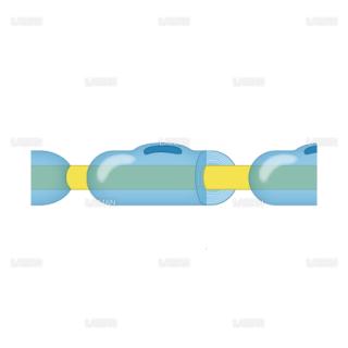 シュワン細胞(Mサイズ)