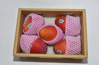 台湾愛文マンゴー/アップルマンゴー 2.5kg(個数5〜7個)