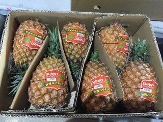 台湾パイナップル 5〜8玉 10kg