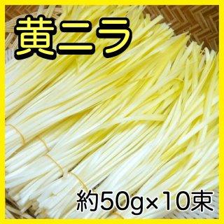 ◆送料無料◆岡山県産 黄ニラ 1箱/50g×10束