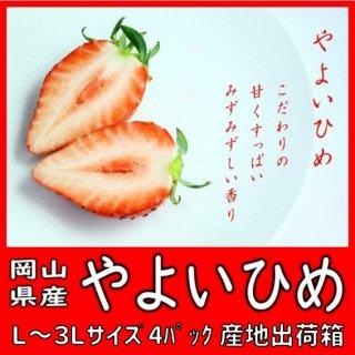 ◆送料無料◆こだわりの生産者太忠さんの大粒苺「やよいひめ」 岡山県産 2L〜3Lサイズ 4パック入