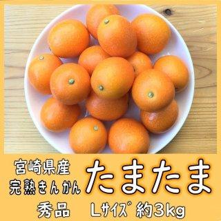 ◆送料無料◆完熟きんかん「たまたま」 宮崎県産 1箱/約3kg Lサイズ