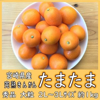 ◆送料無料◆完熟きんかん「たまたま」 宮崎県産 1箱/約1kg 2L〜3Lサイズ