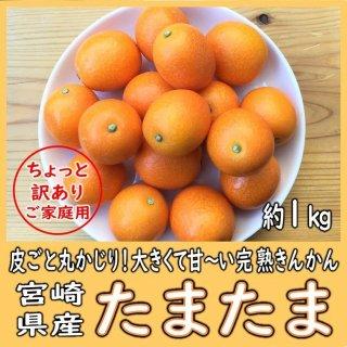 ◆送料無料◆完熟きんかん「たまたま」 宮崎県産 ご家庭用 1箱/約1kg