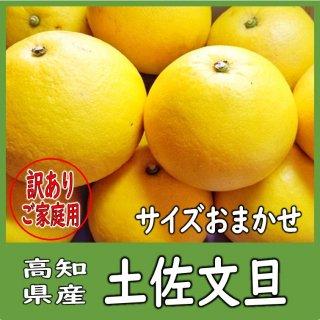 ◆送料無料◆高知県産 土佐文旦 ご家庭用