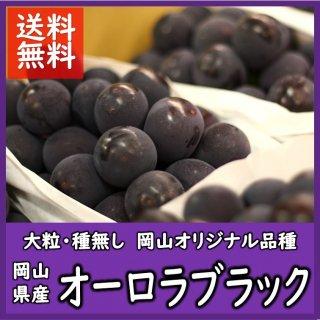 ◆送料無料◆岡山県産オーロラブラック 露地物 赤秀品 約2kg/3〜5房入(房数指定不可)