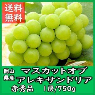 ◆送料無料◆岡山県産 マスカット・オブ・アレキサンドリア 秀品 1房 750g