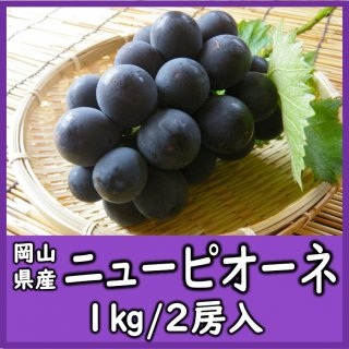 ◆送料無料◆岡山県産ニューピオーネ 露地物 秀品 1箱/2房入(1房500g)