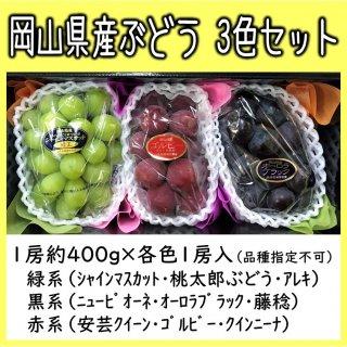 ◆送料無料◆岡山県産ぶどう 食べ比べセット 露地物 1箱/3房入