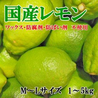 ◆送料無料◆国産レモン/グリーンレモン 愛媛県産 秀品 M〜Lサイズ