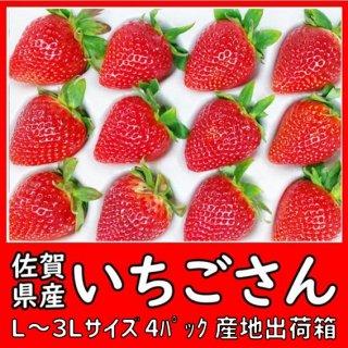 ◆送料無料◆いちごさん 佐賀県産 2L〜3Lサイズ 4パック入 産地出荷箱