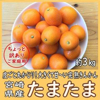 ◆送料無料◆完熟きんかん「たまたま」 宮崎県産 ご家庭用 1箱/約3kg