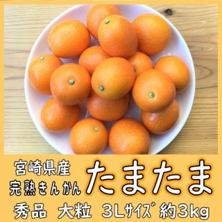 ◆送料無料◆完熟きんかん「たまたま」 宮崎県産 1箱/約3kg 3Lサイズ