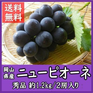 ◆送料無料◆岡山県産ニューピオーネ 秀品 1箱/2房入(1房約600g)
