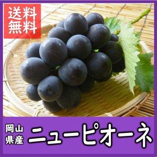 ◆送料無料◆岡山県産ニューピオーネ 露地物 秀品 1箱/2房入(1房700g)