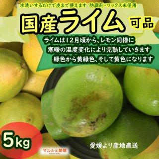 ライム 5kg サイズ混合 風すれ 家庭用 国産 果汁たっぷりライムの色は黄色