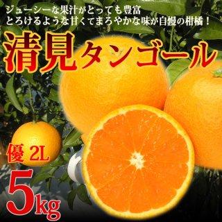 清見タンゴール 優 2L  5kg 樹上越冬栽培 三崎 清見オレンジ 一部地域送料無料