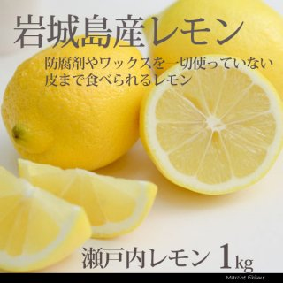 瀬戸内レモン 整品 1kg  まれに小傷有 国産 愛媛 いわぎ島
