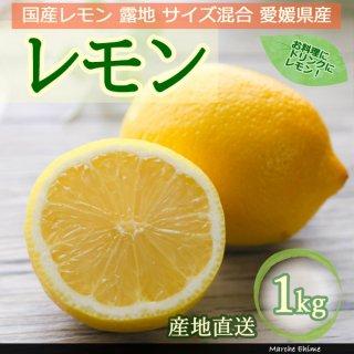 レモン 1kg サイズ混合 家庭用 露地 国産レモン 風スレ色ムラ有