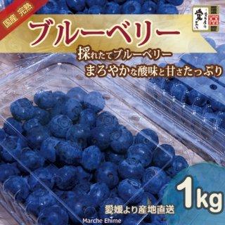 ブルーベリー 1kg 愛媛 国産 エコえひめゴールド認証 地域限定送料無料