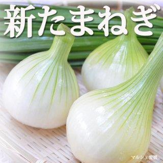 新たまねぎ 玉葱 3kg サイズ混合 愛媛県産 ご家庭用 一部地域送料無料